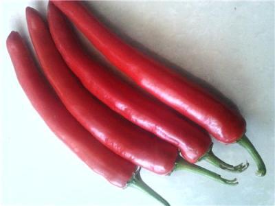 鲜辣椒大量上市了