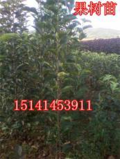 123果樹苗 123果樹苗價格--占地果樹苗