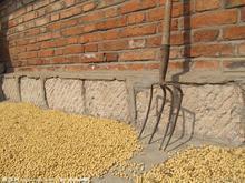 优质大豆便宜出售