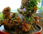 揭示上水石上可種植花草的奧秘