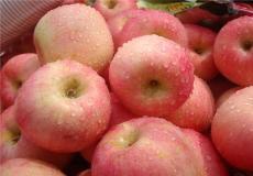 烟台红富士苹果的授粉与疏果
