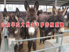肉驴育肥肉驴的生产性能