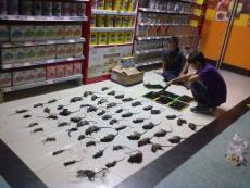 柳州赫鼎鸿酒店灭鼠.超市灭鼠.除四害服务